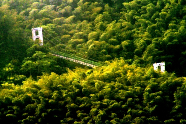 11竹林風韻之美 《一》