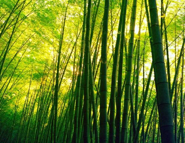 14竹林風韻之美 《一》