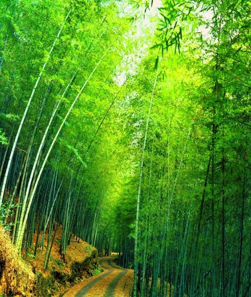 13竹林風韻之美 《一》