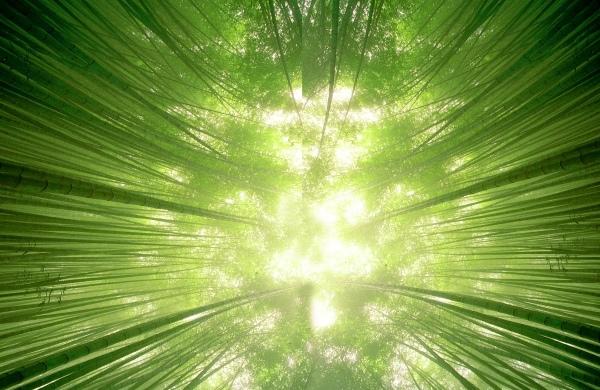 12竹林風韻之美 《一》