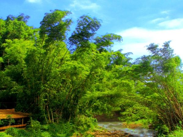 19竹林風韻之美 《一》