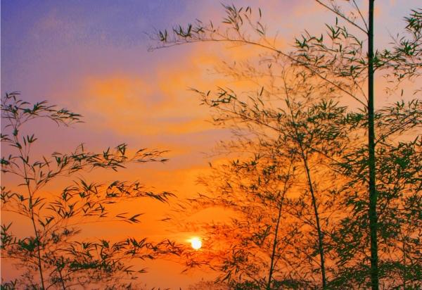 20竹林風韻之美 《一》