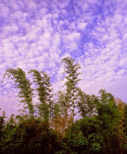 17竹林風韻之美 《一》