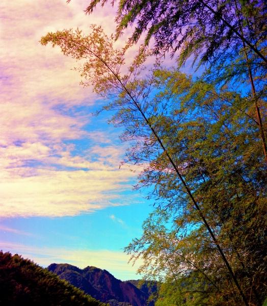 18竹林風韻之美 《一