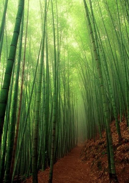 4竹林風韻之美 《二》