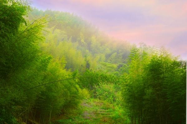 2竹林風韻之美 《二》
