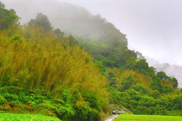 3竹林風韻之美 《二》