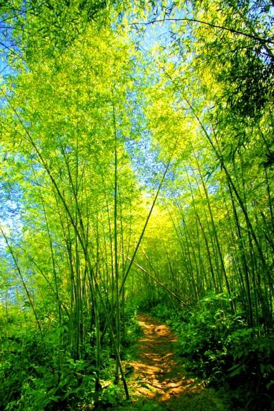 7竹林風韻之美 《二》