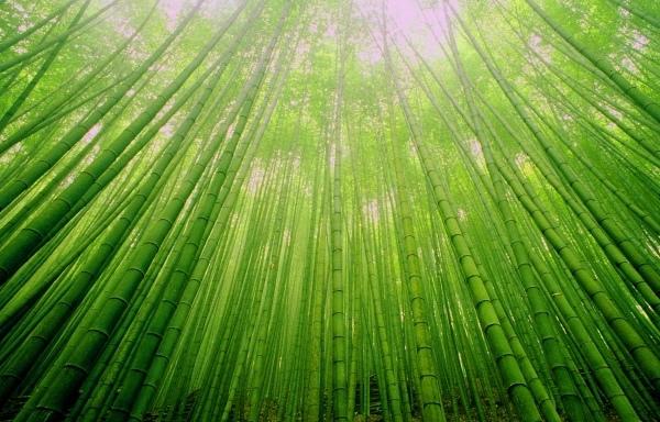 9竹林風韻之美 《二》