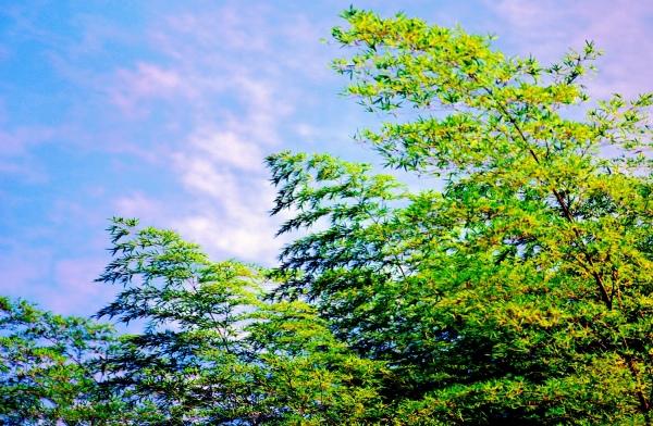 10竹林風韻之美 《二》