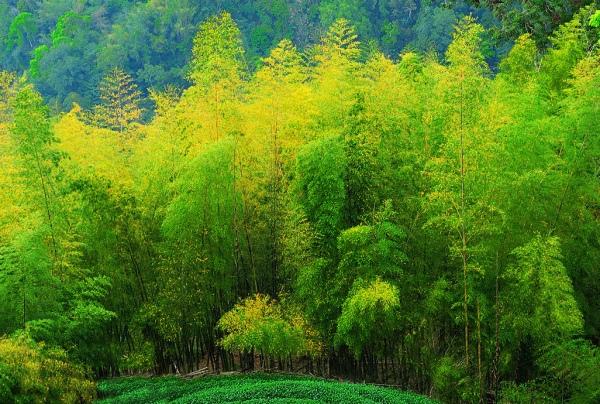 8竹林風韻之美 《二》