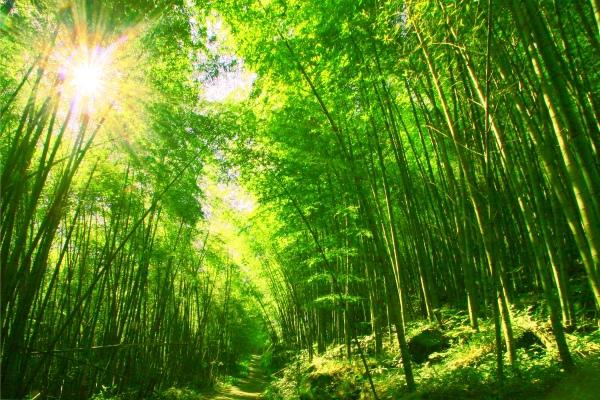 6竹林風韻之美 《二》