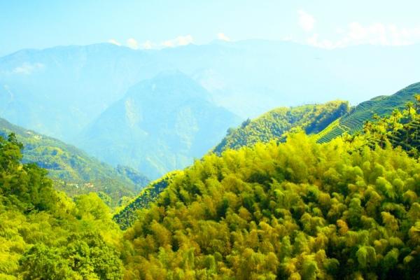 12竹林風韻之美 《二》