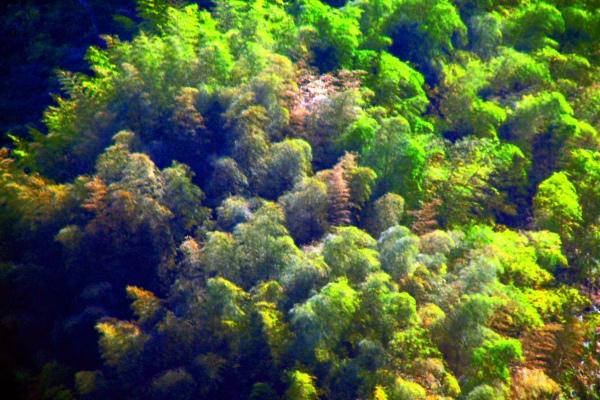 15竹林風韻之美 《二》