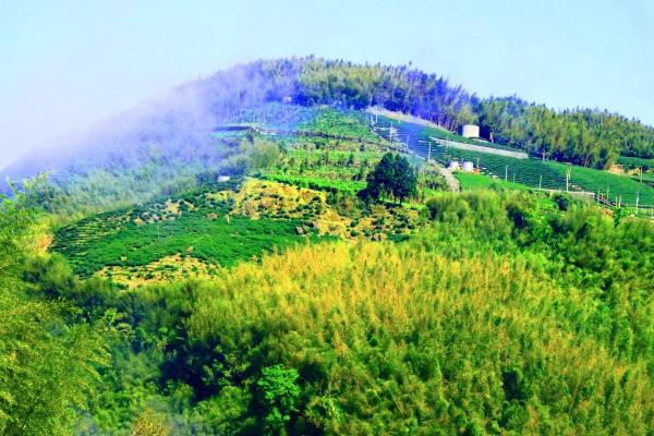 13竹林風韻之美 《二》