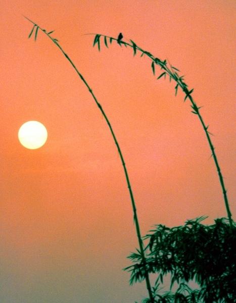 19竹林風韻之美 《二》