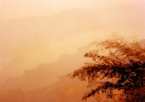 18竹林風韻之美 《二》