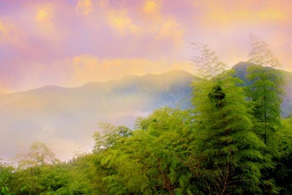 20竹林風韻之美 《二》