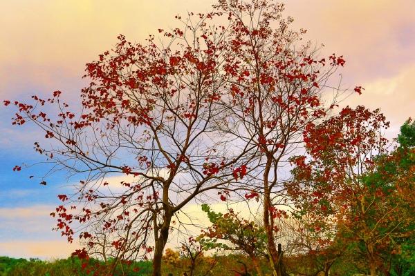 5美麗的秋在山巒上  二_01