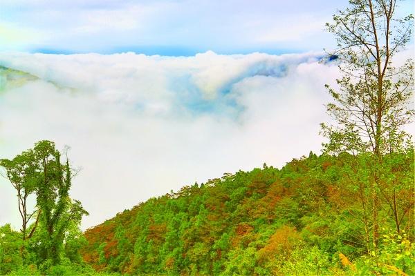 8尖石鄉錦屏村 在峽谷與雲端賞楓   一