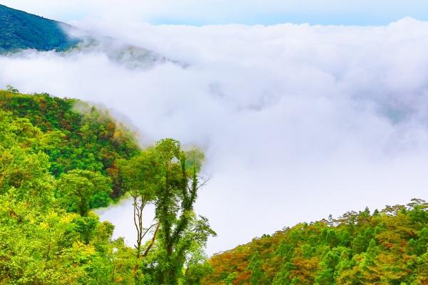 7尖石鄉錦屏村 在峽谷與雲端賞楓   一