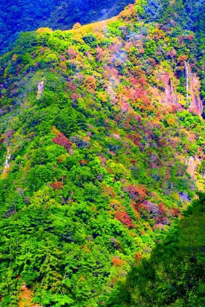 14尖石鄉錦屏村 在峽谷與雲端賞楓   一