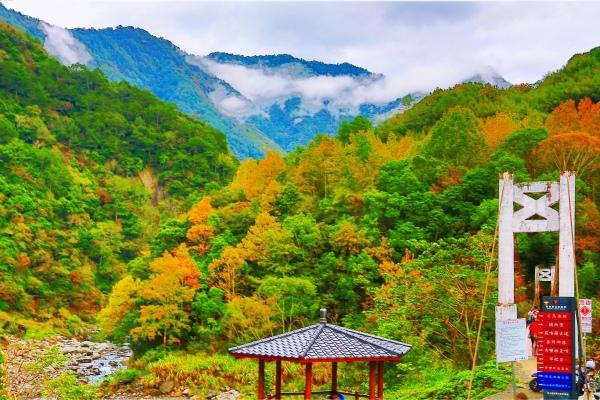 18尖石鄉錦屏村 在峽谷與雲端賞楓   一