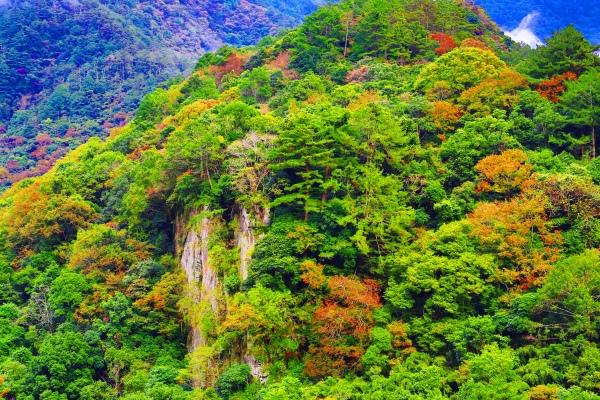 5尖石鄉錦屏村 在峽谷與雲端賞楓   一