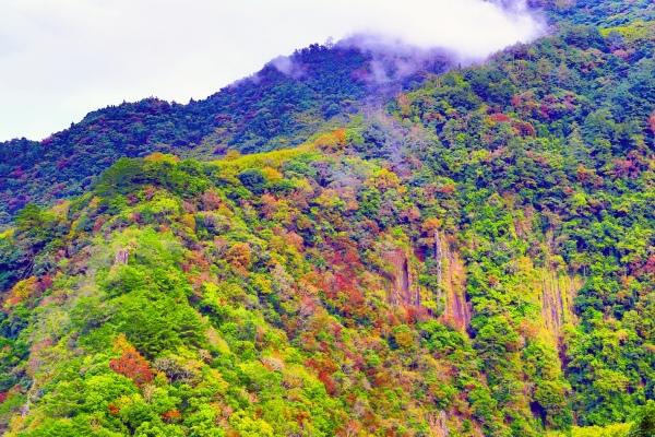 3尖石鄉錦屏村 在峽谷與雲端賞楓   一