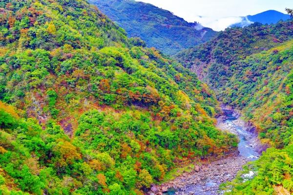 2尖石鄉錦屏村 在峽谷與雲端賞楓   一