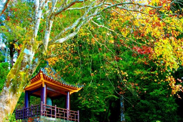 5玉山國家公園   阿里山風景區紅艷正燦爛