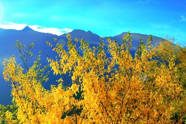 6玉山國家公園   阿里山風景區紅艷正燦爛