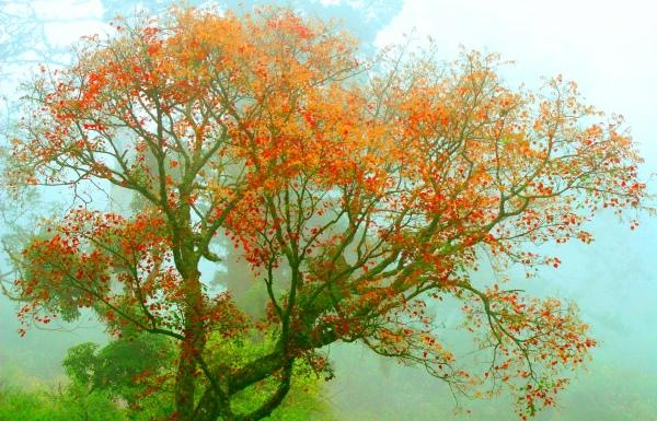 10玉山國家公園   阿里山風景區紅艷正燦爛