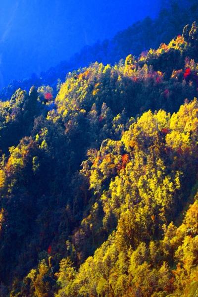 12玉山國家公園   阿里山風景區紅艷正燦爛