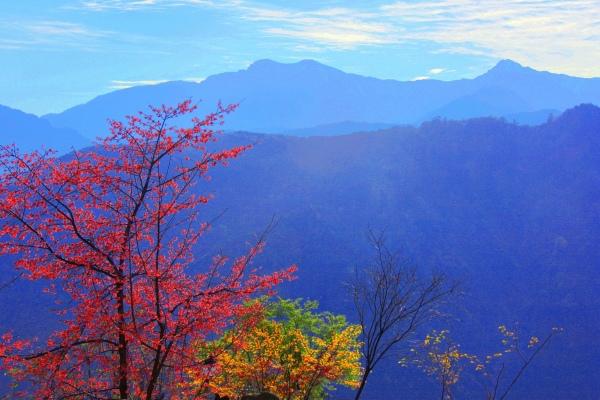 1玉山國家公園   阿里山風景區紅艷正燦爛