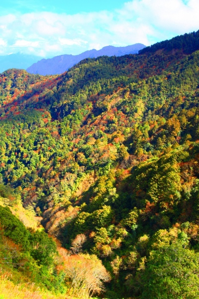 3玉山國家公園   阿里山風景區紅艷正燦爛