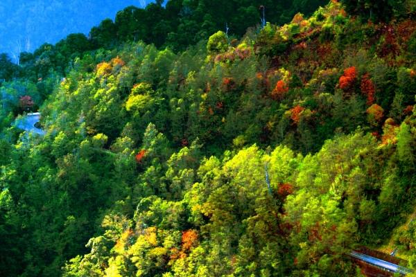 2玉山國家公園   阿里山風景區紅艷正燦爛