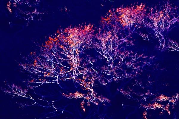 7玉山國家公園   阿里山風景區紅艷正燦爛