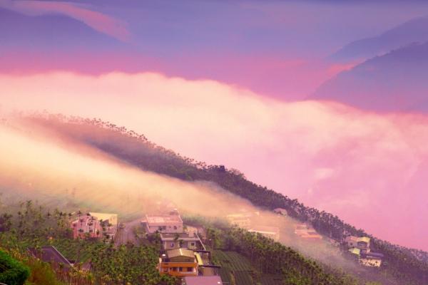 5碧湖茶山冬色
