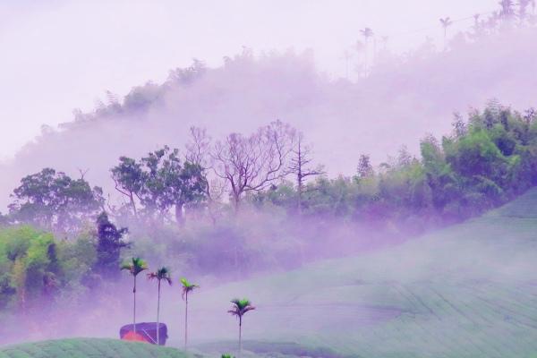 7碧湖茶山冬色