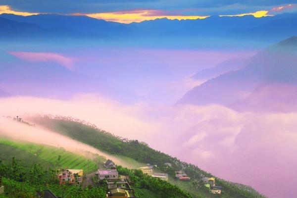 13碧湖茶山冬色 二