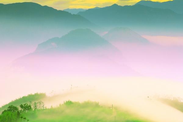 16碧湖茶山冬色 二