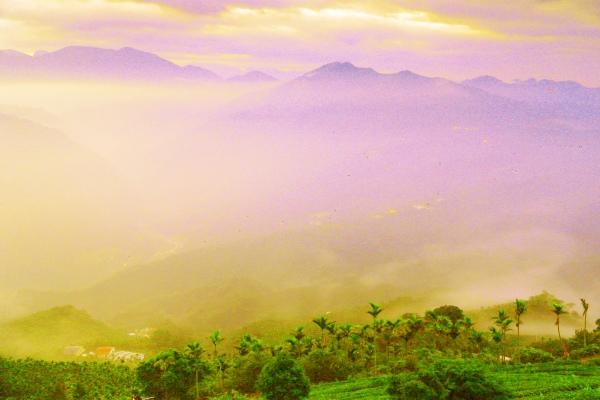18碧湖茶山冬色 二