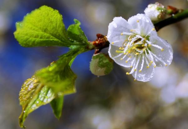 15拍攝梅花之美緣起