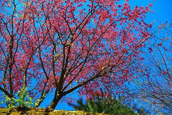 7走訪山林賞花而喜樂