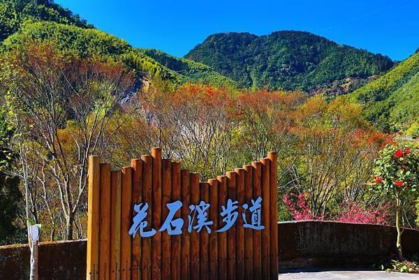 25走訪山林賞花而喜樂