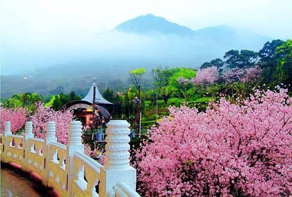 2天元宮櫻花之美