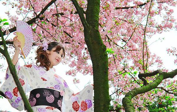14天元宮櫻花之美