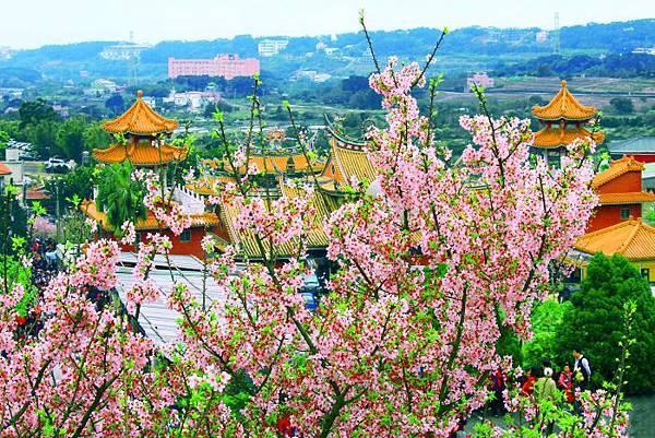 22天元宮櫻花之美