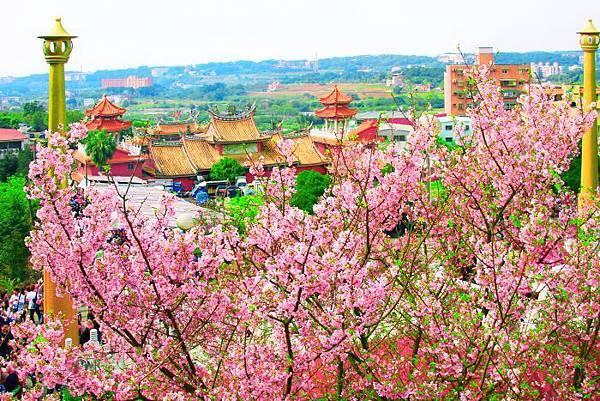 1天元宮櫻花之美